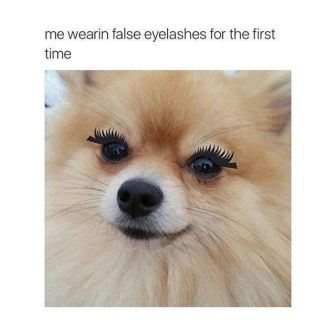 dog lashes meme